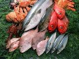花粉症に限らず、健康のためにも魚を食べましょう!