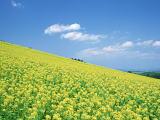 花粉症の原因植物は約50種類以上!