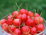 シラカンバ花粉症患者の約6割の方が果物過敏症を合併しているといわれています