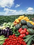 野菜中心のバランス良い食生活が花粉症予防には大切です