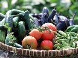 旬の野菜を積極的に摂りましょう!